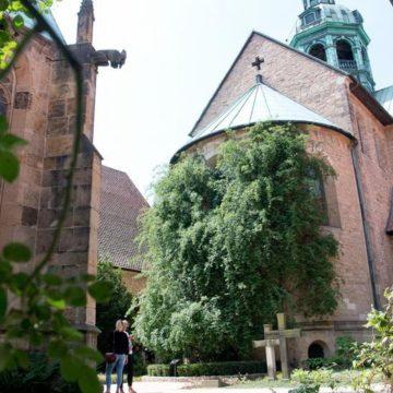 У Німецькому соборі розквітла 1000-річна троянда (фото)