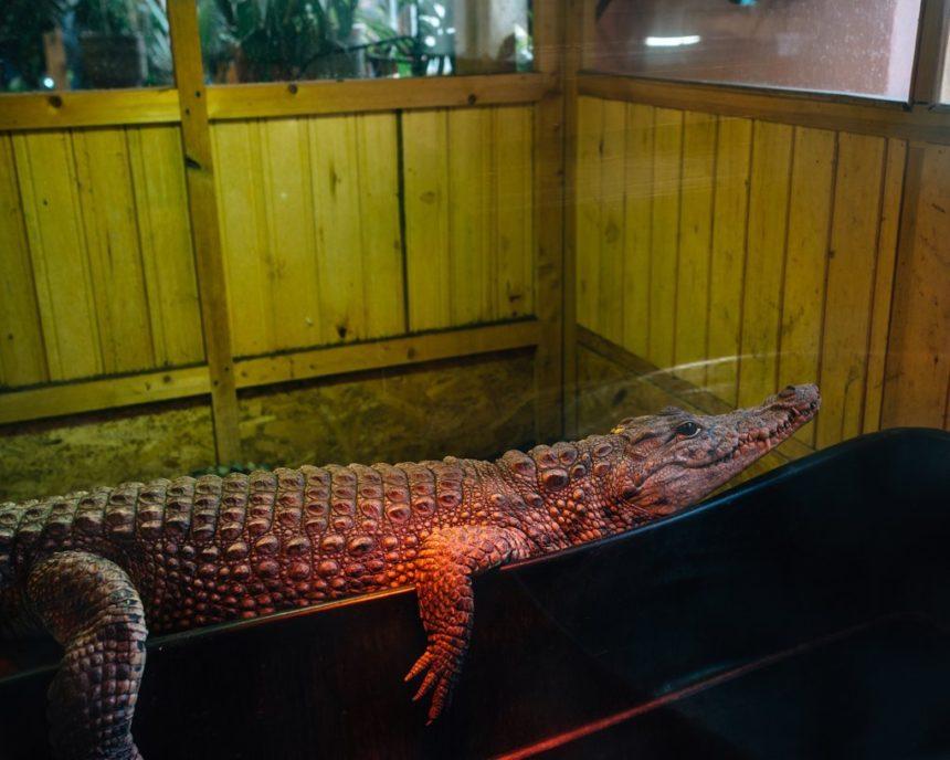 Під Петербургом священик відкрив при церкві зоопарк із крокодилами (фото)