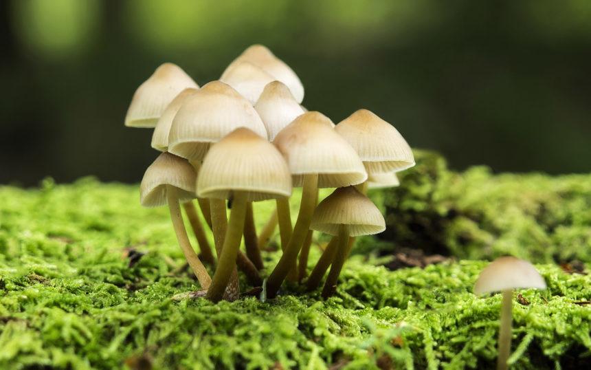 У храмі УПЦ МП в окупованмоу Криму вісім вірян отруїлися грибами – ЗМІ